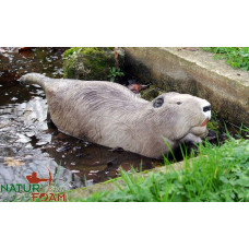 Natur Foam 	BEAVER - SWIMMING